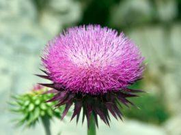 10 лучших трав для уничтожения жира в области живота и выведения токсинов!