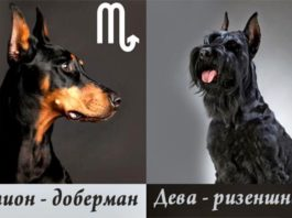 Ваш знак зодиака расскажет, с собакой какой породы вы больше всего похожи