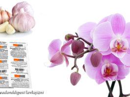 Чеснок – лекарство для орхидей. Результат будет уже через 14 дней