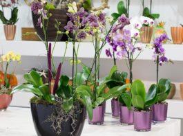 Секреты размножения орхидеи: как одно растение превратить в 100!