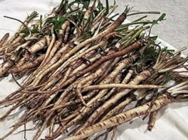 В 100 раз эффективнее химиотерапии: трава, которая убивает раковые клетки в течение 48 часов!