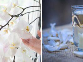 Как приготовить чесночный раствор, который повысит иммунитет орхидеи