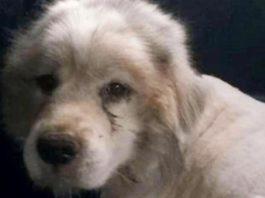 Он запер собаку на 7 лет в сарай…