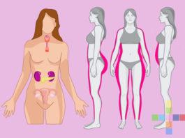 Кортизол, эстроген, инсулин: Как питанием сбалансировать главные гормоны