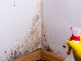 Распылите это средство и избавьтесь от плесени без вреда для здоровья!