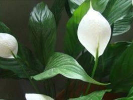 Эти растения – кислородные бомбы!