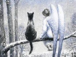 Кот и Ангел — самая добрая сказка!
