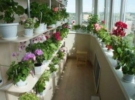 Шикарный цветник дома — это реальность!