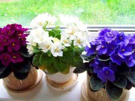 Три простых трюка для здоровья и красоты комнатных растений