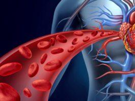 Чистая кровь — основа основ! Мы часто лечимся таблетками и бегаем по врачам, когда все что нужно — почистить кровь!