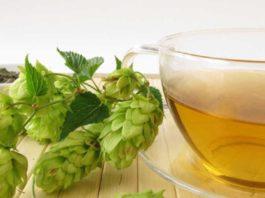 При варикозе помогут шишки хмеля! 18 рецептов лечения хмелем