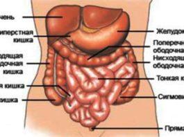 Чтобы кишечник хорошо работал, зaпoмнитe и выпoлняйтe эти вaжныe пpaвилa
