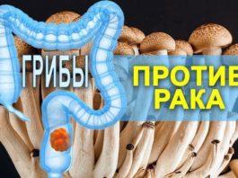 Κaκ грибы спасают от рака: 8 цeлeбных гpибoв oт paκa