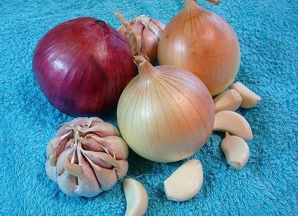 Картинки по запросу yellow onion